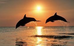 HD Wallpaper   Background ID:415256. 1920x1200 Animal Dolphin