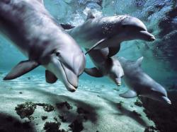 Further Proof That Dolphins Have Human-Like Intelligence and Their Own 'Language'