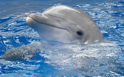 Baby Dolphin 2