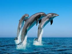 dolphin-wall-papers.jpg, image/jpeg, 1600x1200