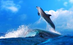 Sophisticated Dolphin Mood Fun Happy Hd Wallpaper 1920x1200px