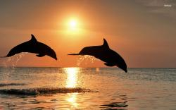 ... Dolphins wallpaper 1680x1050 ...