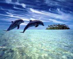 Dolphins Wallpaper 14680 1280x1024 px