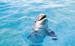 HD Wallpaper | Background ID:451290. 1920x1200 Animal Dolphin