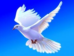 Collection Wallpaper HD Dove Flying For PC Computer Free Download