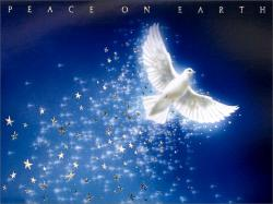 free+christmas+photos+with+doves | Free CHRISTMAS DOVE Wallpaper - Download The Free CHRISTMAS DOVE ... | Dove pictures | Pinterest