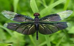 DOWNLOAD: dragonfly dark insect wallpapers free picture 2560 x 1600