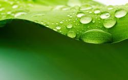 Drops on Leaf