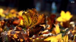 Dry Autumn Leaves wallpaper 1920x1080