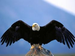 1900_eagle ...