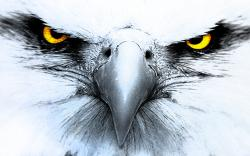 ... Eagle Wallpaper 143 ...