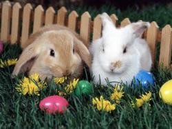 Easter-Rabbit-
