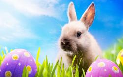 Easter Screensavers