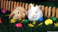 Easter Wallpaper 44334 1920x1080 px