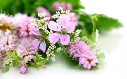 Elegant Flowers 22070 1600x1000 px