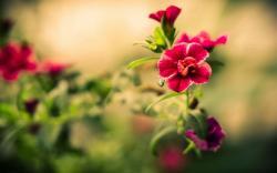 Elegant Flowers 22065 1920x1080 px