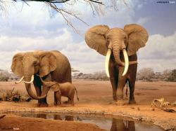Elephant Hd An elephant family HD