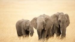 Cool Elephant Wallpaper 20464