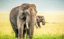 HD Wallpaper | Background ID:383296. 1920x1200 Animal Elephant
