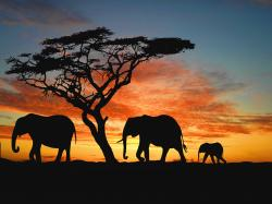 Silhouette Elephant Wallpaper 20469