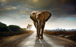 African Elephant Wallpaper Free Download