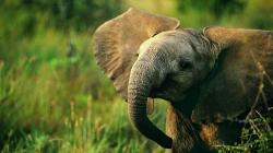 Elephant Wallpaper 21693