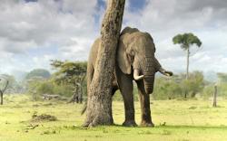 HD Wallpaper | Background ID:351429. 2560x1600 Animal Elephant