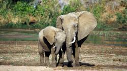 beautiful elephant top hd wallpapers desktop background images