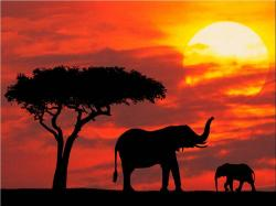 Image for amazing african elephant wallpaper hd