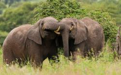 Elephants Nature