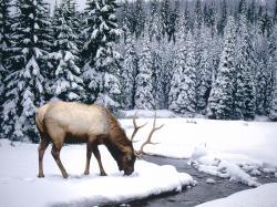 HD Wallpaper | Background ID:431891. 2560x1920 Animal Elk