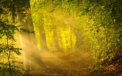 Enchanted forest path