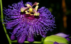 Exotic Flower Wallpapers And Images