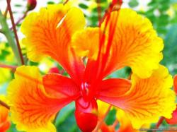 Exotic Flowers Images 8 HD Wallpapers