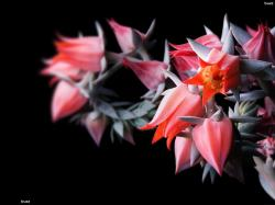 Exotic Flowers HD Wallpaper