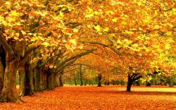 Autumn fall ba.