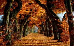 Fall Wallpaper 15877 2560x1600 px