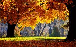 Fall Wallpaper 13