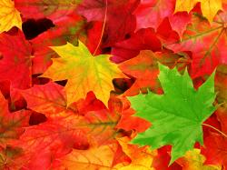 Best Fall Leaves Macro Wallpaper HD