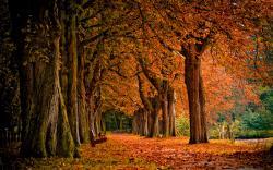 Fall Trees Wallpaper