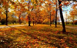 Fall Trees Background