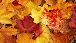 Fall Wallpaper · Fall Wallpaper ...