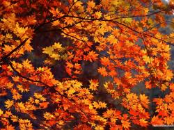 Fall Wallpaper 347 Best Background