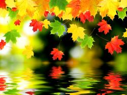Fall Wallpaper 636 HD Cool