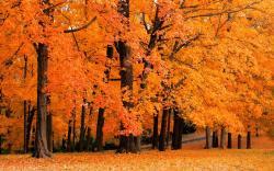 Fall Wallpaper 5