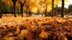 Falling Leaves HD Wallpapers