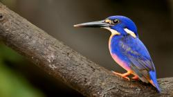 Fantastic Blue Bird Wallpaper