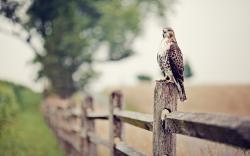 Fantastic Falcon Wallpaper