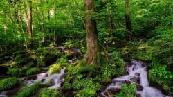 Fantastic forest stream HQ WALLPAPER - (#140054)