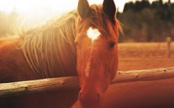 Horse Close Up Wallpaper